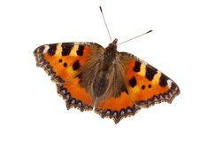 Colored butterfly Royalty Free Stock Photos