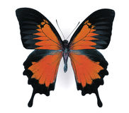 Colored Butterfly Stock Photography