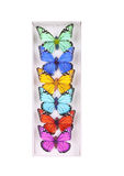 Colored butterfly collection. Multicolored butterfly collection in box isolated on white Royalty Free Stock Photography