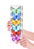 Colored butterfly collection in hands Stock Images