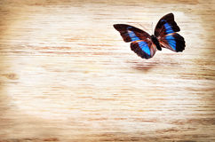 Colored butterfly flying over a light background