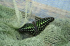 Colored butterfly in the green grid. Large in the frame color butterfly in the green grid Royalty Free Stock Image