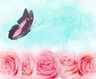 Colored butterfly hovering over a background of roses. Beautiful colored butterfly hovering over a background of roses Royalty Free Stock Photos