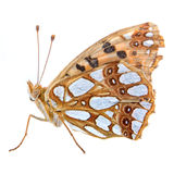Colored butterfly on the white background Royalty Free Stock Photography