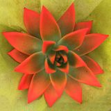 Colored cactus. With green background Royalty Free Stock Images