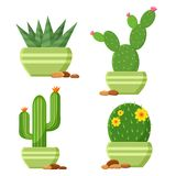Colored cactus set in flowerpots with pebbles. Flowering cactus. Vector illustration royalty free illustration