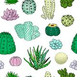 Colored cactuses seamless pattern, hand drawn vector illustration. Succulent collection. n Stock Image