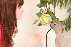 Candy and cat Royalty Free Stock Photo