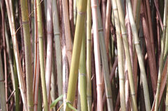 Colored Cane. Bamboo cane in staggered pattern royalty free stock photography