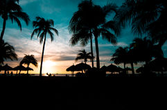 Colored caribbean sunset. Beautiful caribbean sunset. Blue and yellow sky, palm tree silhouettes Royalty Free Stock Photography
