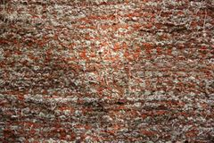 Colored carpet. Flower fabric. Fabric background.  royalty free stock photos