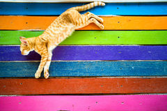 Colored cat on the floor Stock Photo