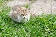Colored Cat Royalty Free Stock Photography