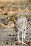 Colored cat walks in the street stock photos