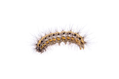 Colored caterpillar on a white background Stock Images