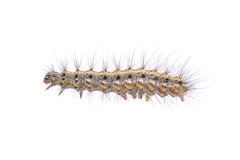 Colored caterpillar on a white background Royalty Free Stock Image