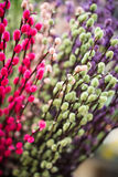 Colored catkins bouquet Stock Image