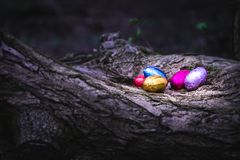 Chocolate Easter eggs hidden by a tree royalty free stock photo