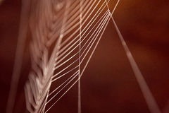 Colored cobweb Royalty Free Stock Photography