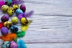 Colored colored quail eggs, with colorful feathers on white wooden background, happy Easter concept.  stock photo