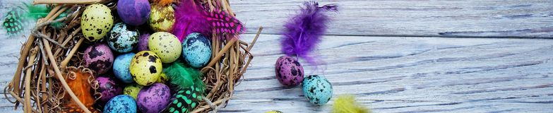 Colored colored quail eggs, with colorful feathers on white wooden background, happy Easter concept.  royalty free stock photos