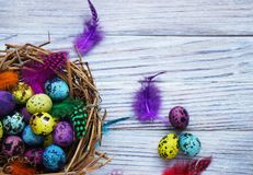 Colored colored quail eggs, with colorful feathers on white wooden background, happy Easter concept.  stock images