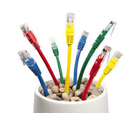 Colored Computer Cables Growing in a Flower-pot Stock Photos