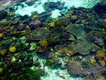 Colored coral, fish and marine life in crystal clear waters of tropical island Stock Image