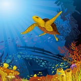 Colored coral reef with yellow turtle Stock Photos