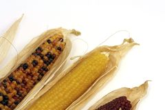 Colored corn cobs Royalty Free Stock Photo