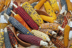 Colored corn cobs Stock Photos