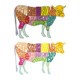 Colored cow parts. Vector illustration of isolated funny cow made from colored words describing parts Stock Photography