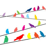 Colored crows on wires Stock Photography