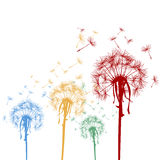 Colored dandelions Royalty Free Stock Photography