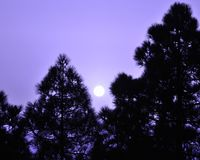 Colored dawn with sun among pines Royalty Free Stock Images