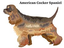 Colored decorative standing portrait of American Cocker Spaniel. Portrait of standing in profile dog American Cocker Spaniel, vector colorful illustration Stock Image