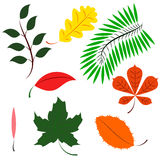 Colored different leaves. Leaves of different continents in color Royalty Free Stock Image