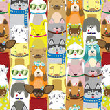 Colored differents cute dogs with acessories. Pattern Stock Images