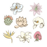 Colored Drawing Botanical Exotic Flowers Set Royalty Free Stock Photography