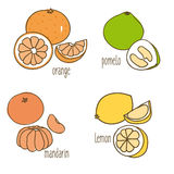 Colored Drawing Citrus Fruits Collection stock illustration