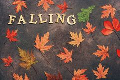 Colored dry autumn leaves on a dark background and the word from wooden letters-falling. Creative autumn layout. Flat lay, copy. Space,overhead view stock photo
