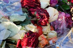 Colored dry wilted flowers roses in a bouquet in cellophane in a pile of garbage. Colored dry wilted buds flowers of roses in a bouquet in cellophane in a pile stock photo