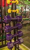 Colored dumbbells in the gym Stock Image