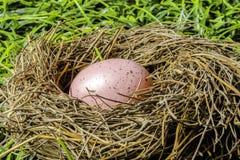 Easter Egg in Birds Nest Stock Images