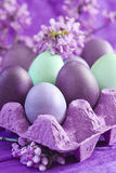 Colored easter eggs. Violet, purple and green easter eggs with spring flowers Stock Photos