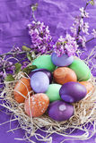 Colored easter eggs. Violet, purple, orange and green easter eggs with spring flowers Royalty Free Stock Photography