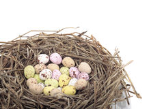 Colored easter  eggs in bird nest over white Stock Image