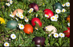 Colored easter eggs. Colorful easter eggs in the basket Royalty Free Stock Photos