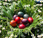 Colored easter eggs. Colorful easter eggs in the grass Royalty Free Stock Photos