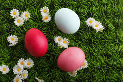 Colored easter eggs with daisy flowers in grass Stock Image